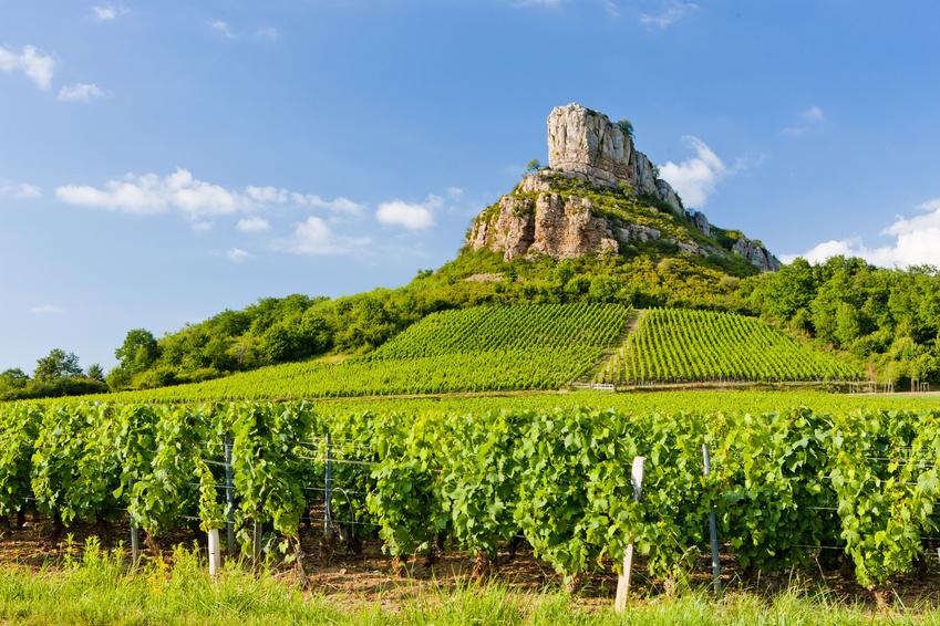 Bourgogne : À la découverte des plus grands crus de la planète
