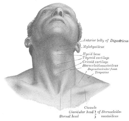 Double menton : le développement d'un double menton fait partie d'une évolution normale intimement lié au vieillissement du visage